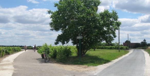 Biking through a vineyard in the Loire Valley